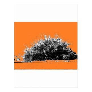Wild Desert Shrub with Orange Postcard