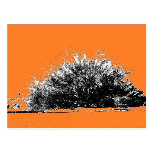 Wild Desert Shrub with Orange Post Card