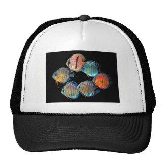 Wild Discus Fish Cap