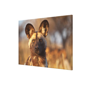 Wild Dog Portrait Canvas Print