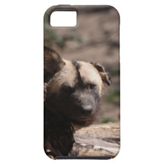 Wild Dog with Floppy Ear iPhone 5 Cases
