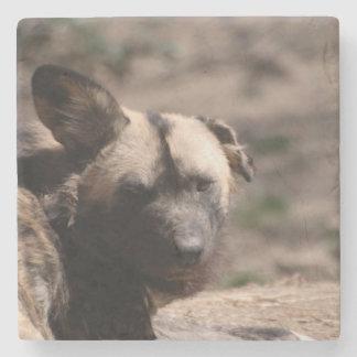 Wild Dog with Floppy Ear Stone Coaster