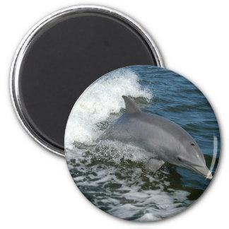 Wild Dolphin Round Magnet