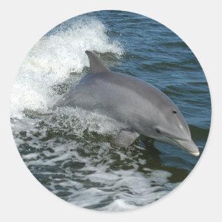 Wild Dolphin Stickers