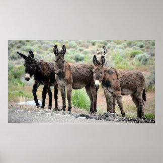 Wild Donkey Trio Poster Print
