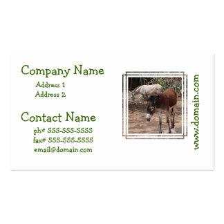 Wild Donkeys Business Card