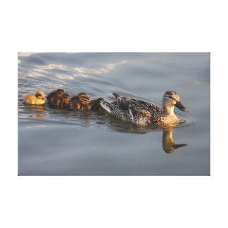 Wild duck family canvas prints