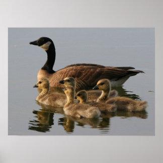 Wild duck family print