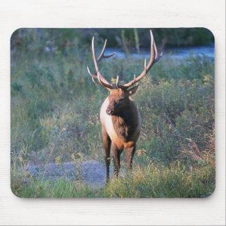 Wild Elk Bull Deer Mousepad