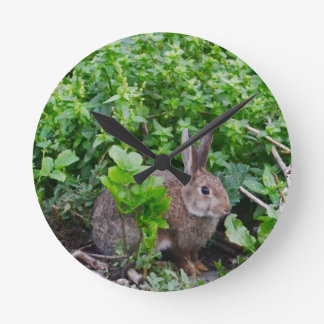 Wild English Rabbit Wallclock