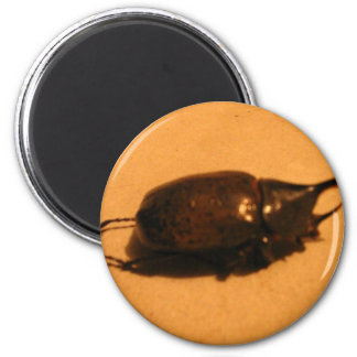 Wild Exotic Spiders, Beetles  and Insects 6 Cm Round Magnet