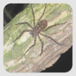 Wild Exotic Spiders, Beetles  and Insects Square Stickers