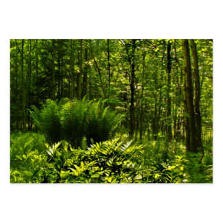 Wild Ferns ATC Pack Of Chubby Business Cards