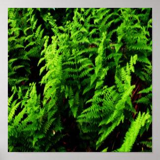 Wild Ferns Poster