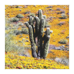 Wild Flower bloom Stretched Canvas Prints