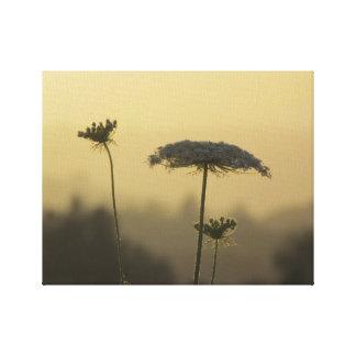 Wild Flower Sunbeam Canvas Canvas Print
