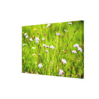Wild flowers in the green meadow canvas print
