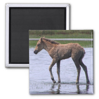Wild Foal Square Magnet