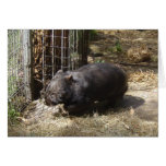 Wild For Wombats Greeting Card