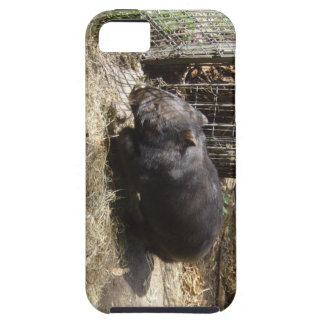 Wild For Wombats iPhone 5 Covers