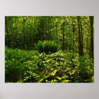 Wild Forest Ferns Print