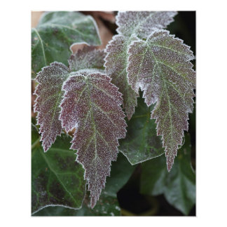 Wild frosted blackberry leaves art photo