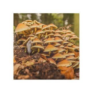 """Wild fungi"" design wall art Wood Prints"