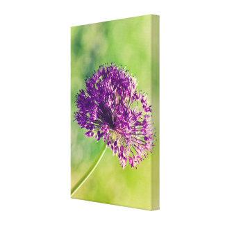 Wild garlic flower canvas print