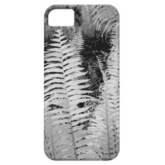 Wild giant leather fern, Florida, USA. iPhone 5 Cover