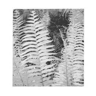 Wild giant leather fern, Florida, USA. Notepad