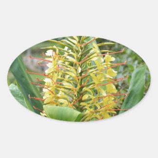Wild Ginger. Oval Sticker