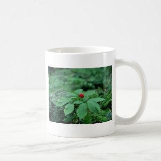 Wild Ginseng (Panax Quinquefolius) flowers Coffee Mug