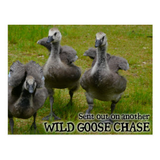 Wild Goose Chase Postcard