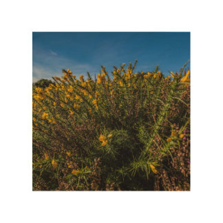 """Wild gorse"" design wall art"