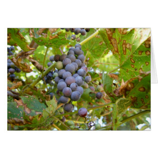 Wild Grapes Card
