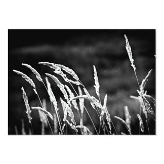 Wild grass in black and white personalized announcement