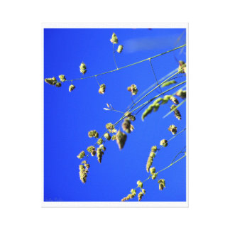 Wild Grasses Gallery Wrapped Canvas