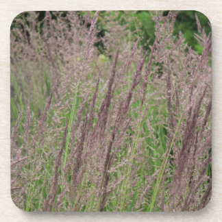 Wild Grasses Of Wisconsin Coaster