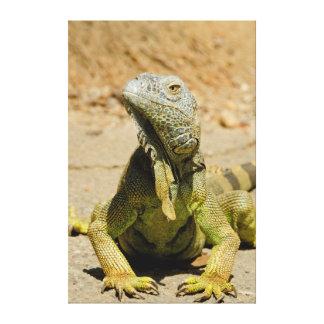 Wild Green iguana Canvas Print
