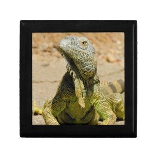 Wild Green iguana Gift Box