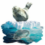 WILD HARBOR SEAL sculpted Wildlife Art Gift