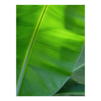 Wild Hawaiian Banana Trees Poster