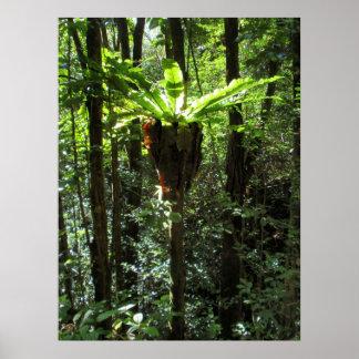 Wild Hawaiian Bird Nest Fern Poster