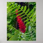 Wild Hawaiian Ginger & Ferns Poster