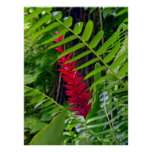 Wild Hawaiian Ginger & Ferns Poster