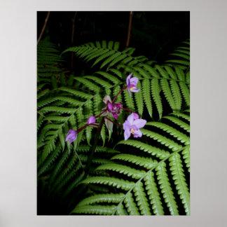 Wild Hawaiian orchids & ferns Poster