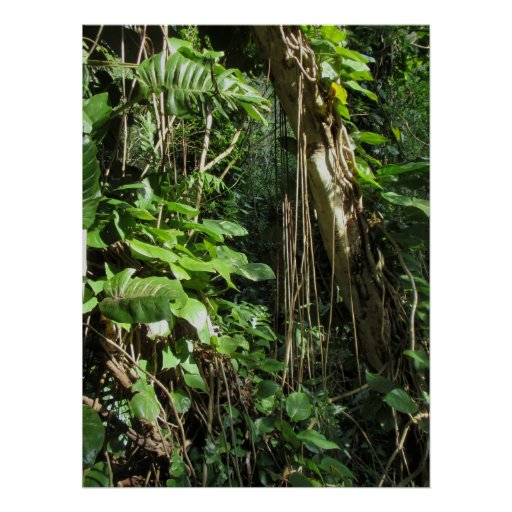 Wild Hawaiian Philodendrons Poster