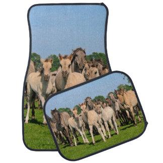 Wild Herd Dulmen Horses with Foals - floor-mats Car Mat