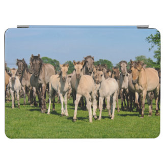 Wild Herd Grullo Colored Dulmen Horses Foals Photo iPad Air Cover