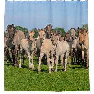Wild Herd Grullo Colored Dulmen Horses Foals - Tub Shower Curtain